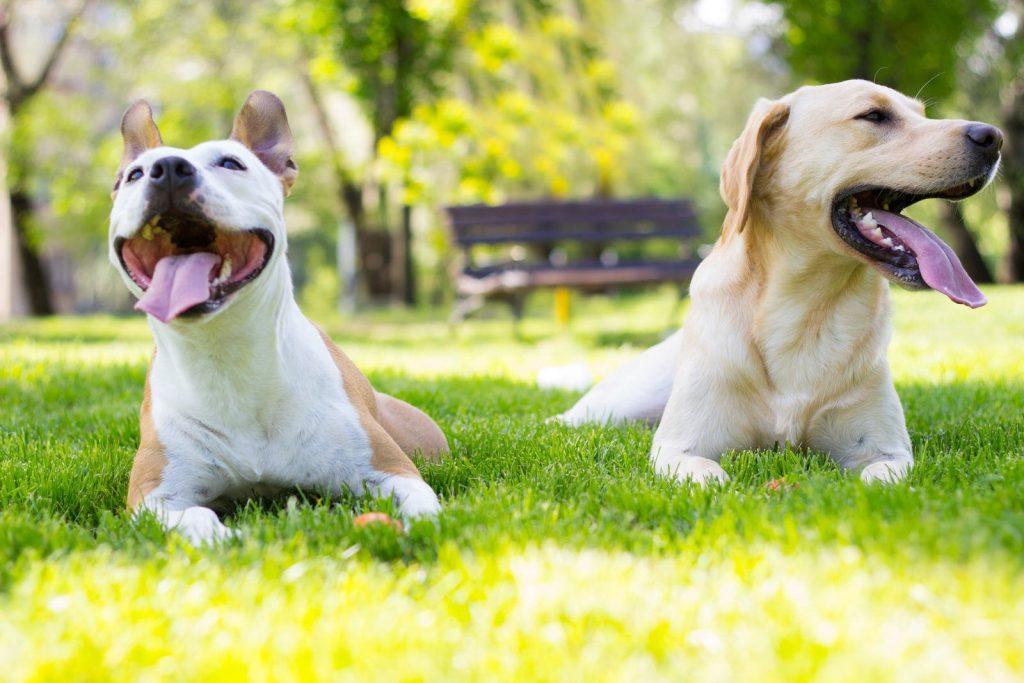 Proper Etiquette at a Dog Park