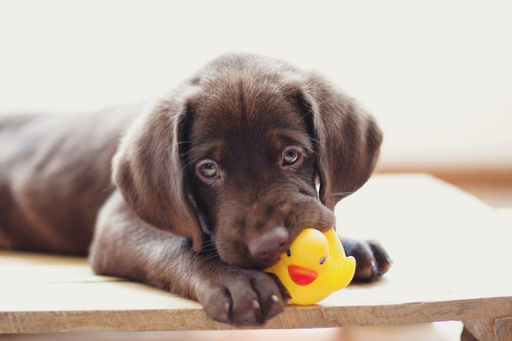 How to Buy a Food-Dispensing Toy for Your Dog