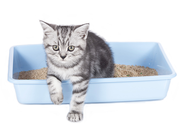 Cat Litter for Dog's Use