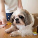 How Does CBD Improve Pet Grooming?
