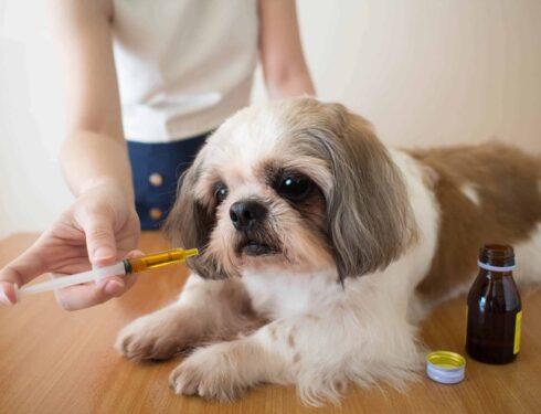 CBD Improve Pet Grooming