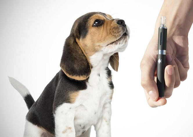 Safety Tips When Vaping around Pets